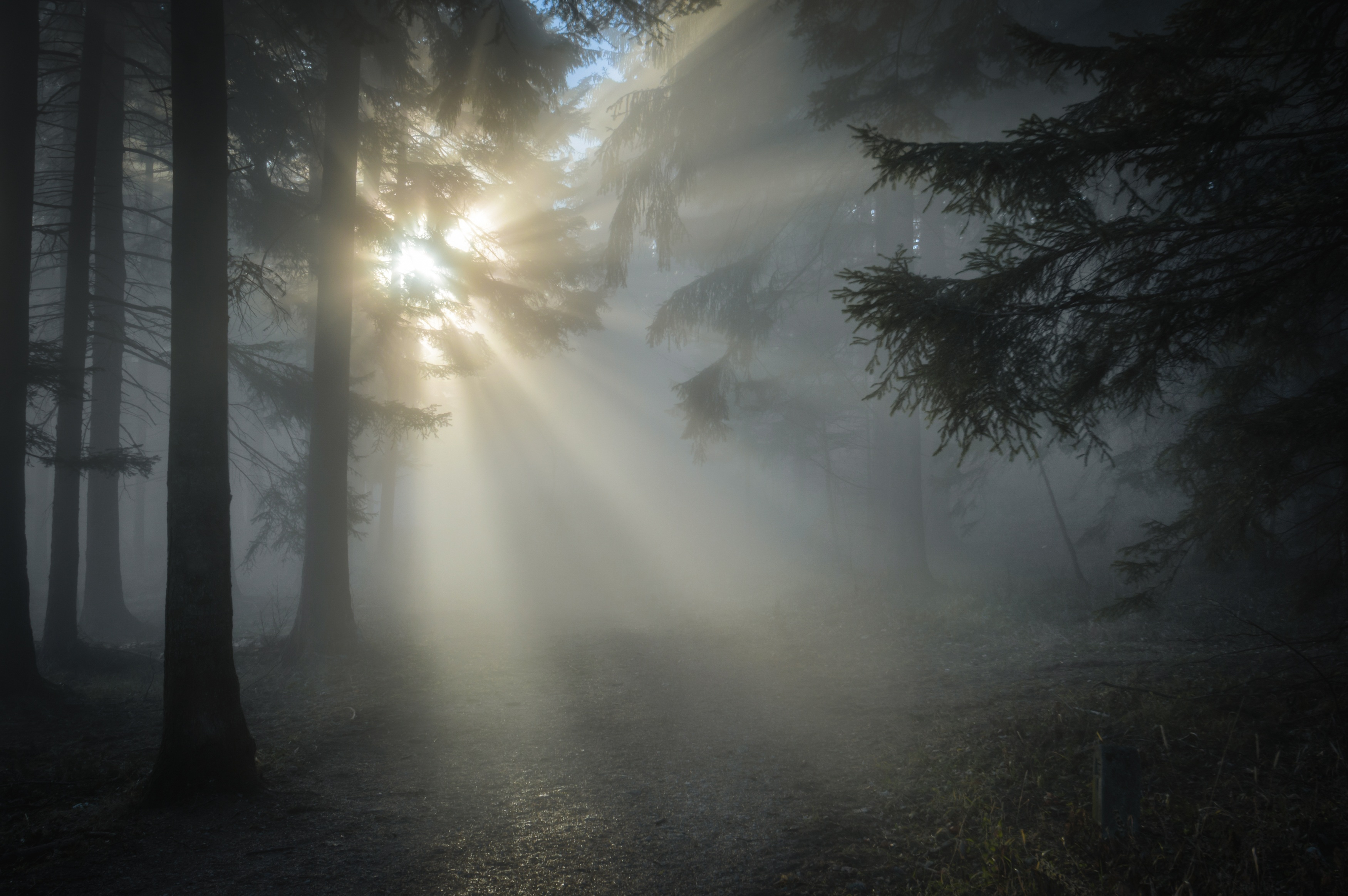 Canva - Sun Rays Through the Tree Leaves and Mist